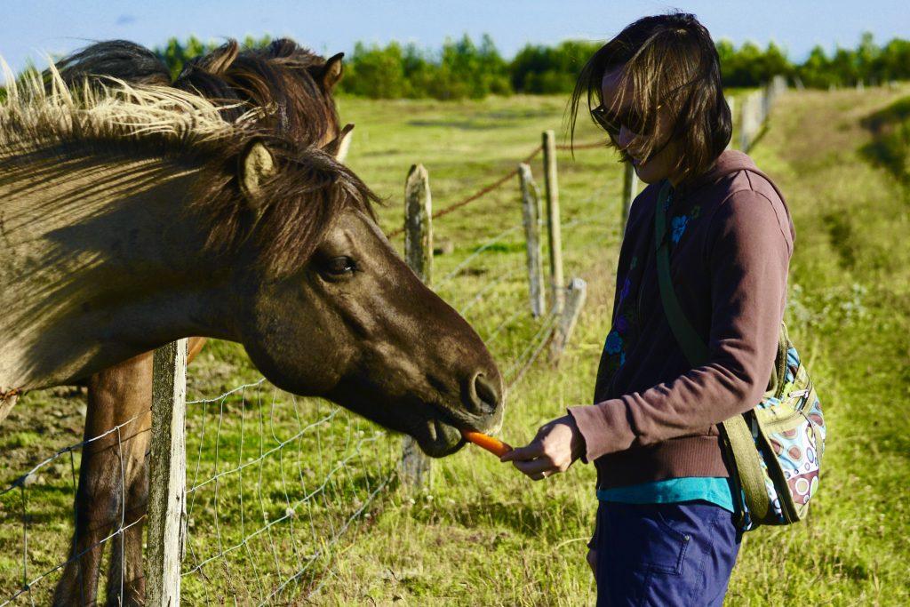 Icelandic Pony Carrot