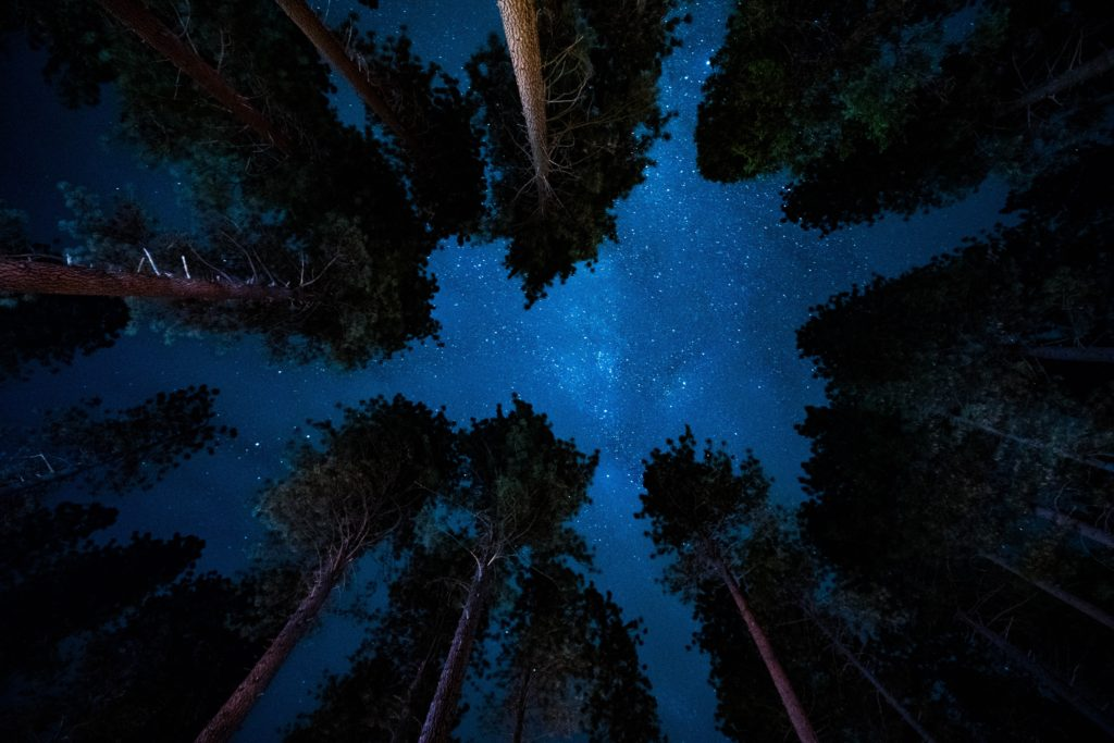 Forest Night Sky as seen by Michael L on Unsplash
