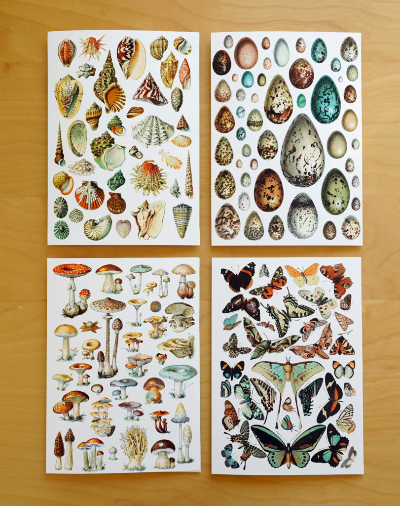 Vintage shells, eggs, mushrooms & butterflies cards at Plaid Frog Press