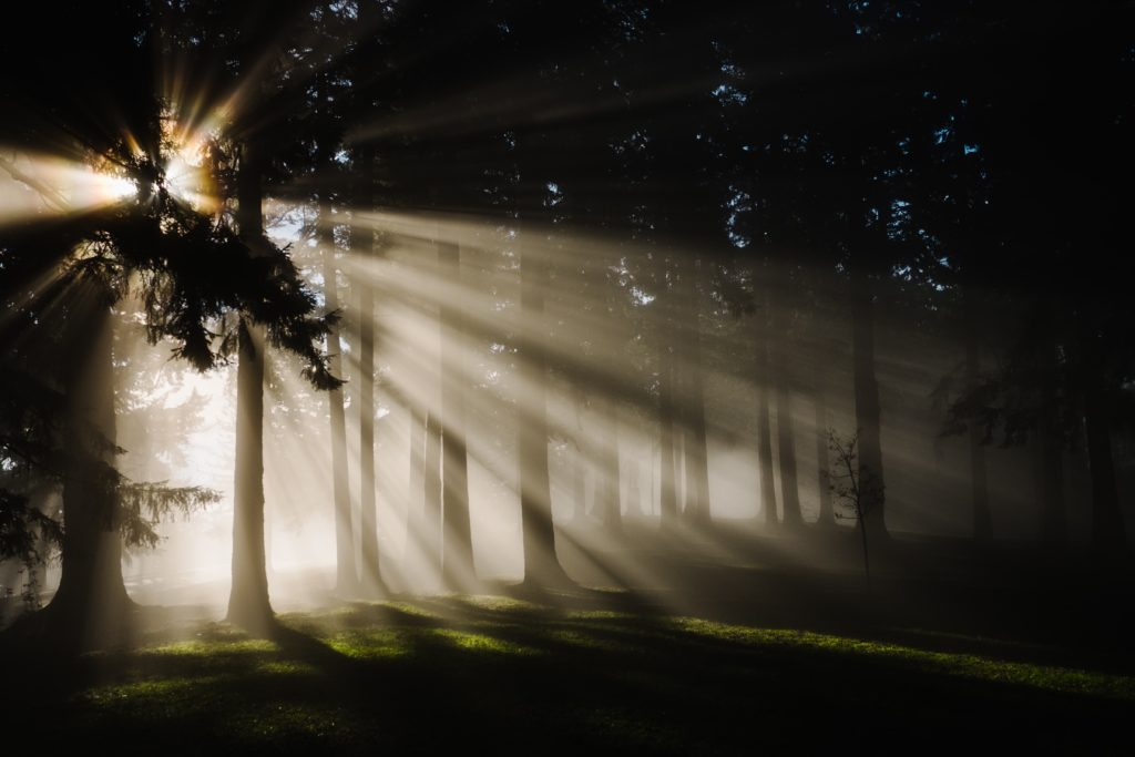 Sun rays through silhouette of trees in a forest